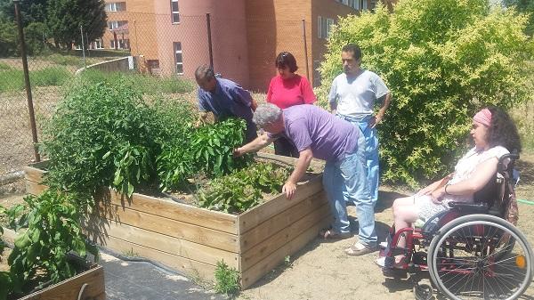 Cuidando la cosecha en los microhuertos. Foto: Grupo AMÁS.