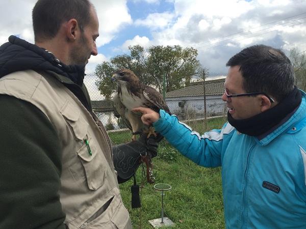 Nueva terapia con aves rapaces. Foto: Grupo AMÁS.