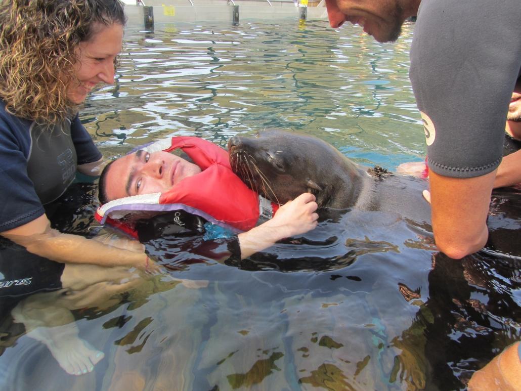 Disfrutando del agua junto al oso marino