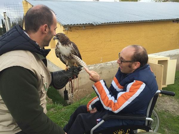 Usuario de Grupo AMÁS durante la terapia con aves rapaces. Foto: Grupo AMÁS.