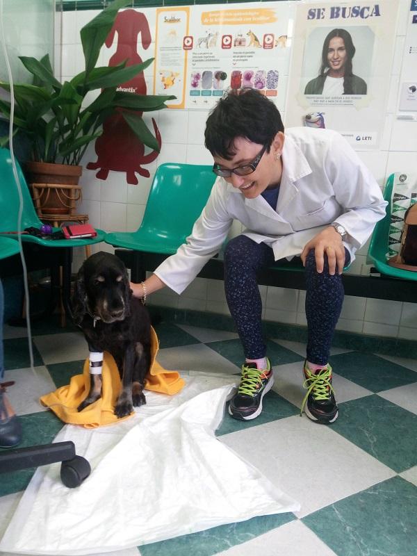 Eli cuidando un perro en la clínica veterinaria. Foto: Grupo AMÁS