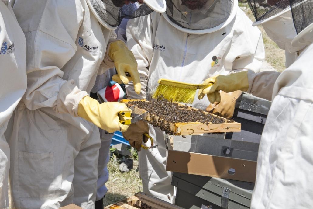Proceso de extracción de miel en el Centro Ocupacional Los Pinos de Grupo AMÁS. Foto: Ayuntamiento de Leganés.