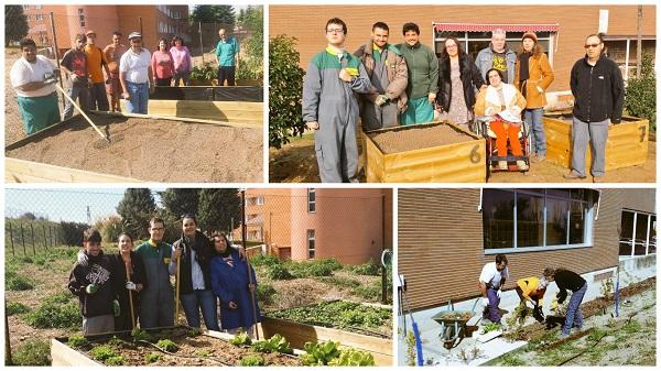 Imagen de los microhuertos en enero. Foto: Grupo AMÁS.