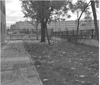 Zona ajardinada actualmente abandonada.